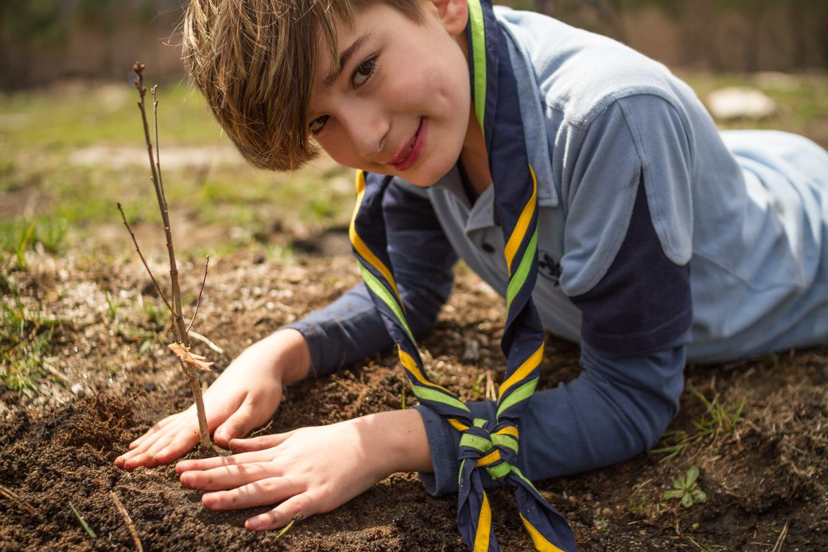 scout pranta arbores coidado forestal